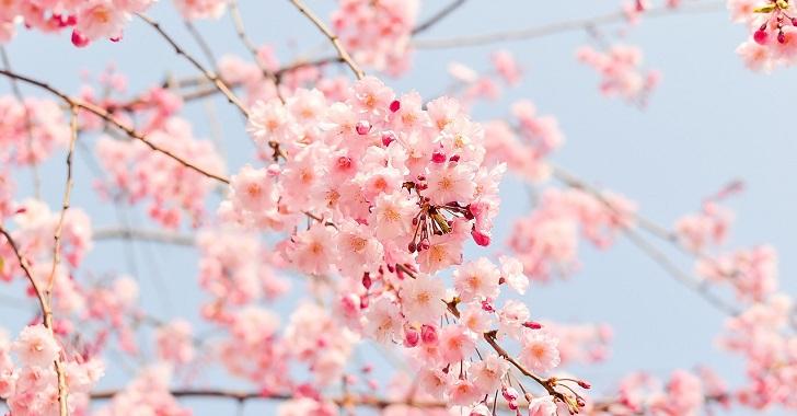 目黒川のお花見2020穴場はどこ?混雑を避けて桜を観賞するには